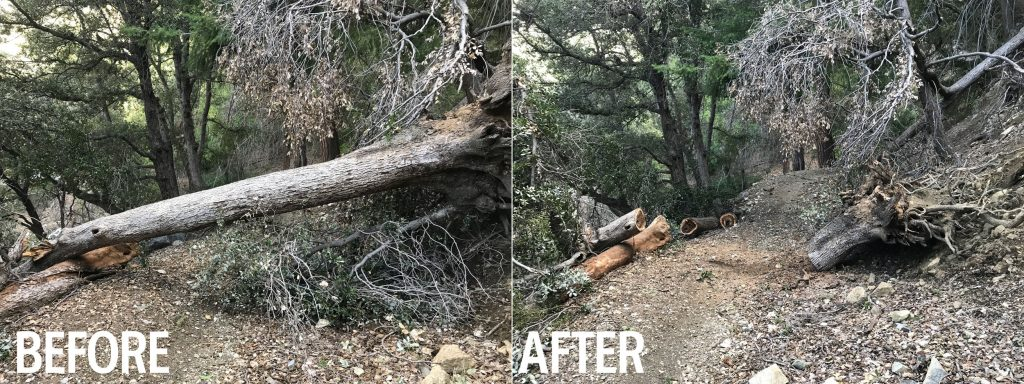Chainsaw on the Gabrielino Trail